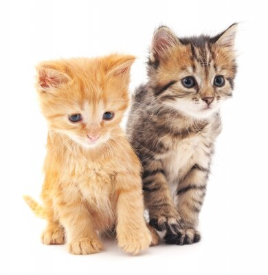 Posters Deux chatons.
