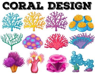 Posters Différents types de coraux