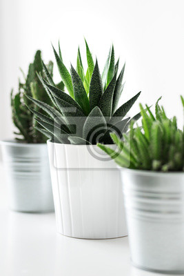 Divers cactus et plantes succulentes dans différents pots se bouchent. Décoration de la chambre moderne. Collection de plantes d'intérieur Cactus.