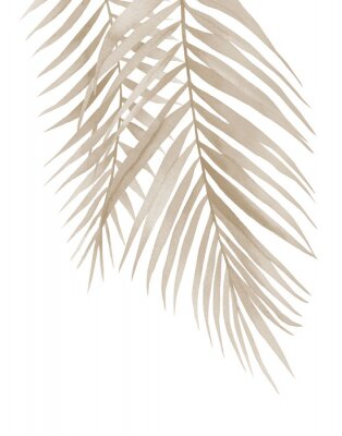 Posters Dried palm branches. Pastel beige leaves. .Watercolour illustration isolated on white background.