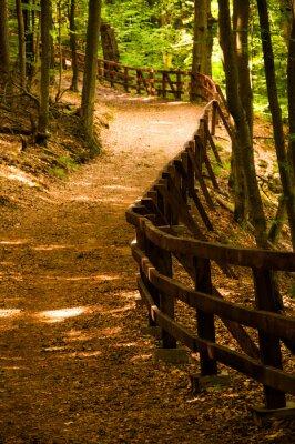 Posters Droga lesie w