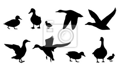 Posters duck silhouettes