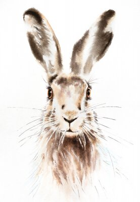 Posters Easter bunnies watercolor illustration, rabbit portrait isolated