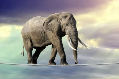 Posters Éléphant, marche, corde