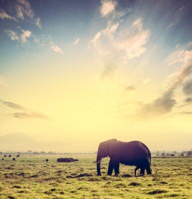 Posters Éléphant sur la savane africaine au coucher du soleil. Safari à Amboseli, Kenya, Afrique