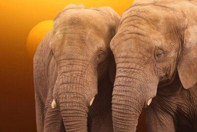 Posters Eléphants Sunrise. Paire d'éléphants ensemble au lever du soleil.