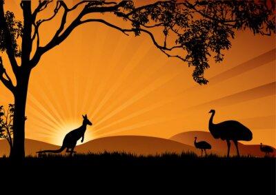 Posters Emu, kangourou, coucher soleil
