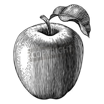 Posters Engraved illustration of an apple  Vector