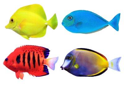 Posters Ensemble de fishs des mers tropicales