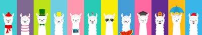 Posters Ensemble de lama alpaga. Personnage mignon de lama drôle de bande dessinée. Toutes les saisons. Heureuse Saint Valentin Noël St Patrick day Parapluie de poulet oiseau oeuf de Pâques. Bonnet de Noel, s