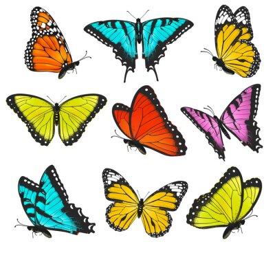Posters Ensemble de papillons illustration colorée