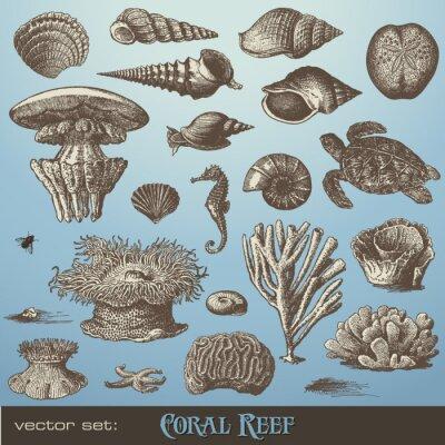 Posters ensemble de vecteurs: récif de corail - variété d'éléments de conception de mer