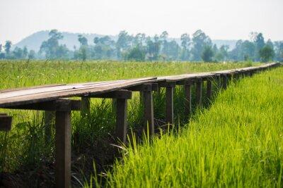 Posters Ensoleillé aube dans un champ en Thaïlande