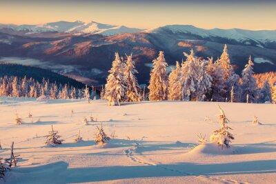 Posters Ensoleillé lever de soleil le matin dans la montagne d'hiver. Style rétro.