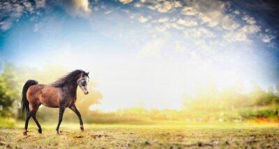Posters Étalon, cheval, courant, trot, nature, fond, beau, ciel, bannière