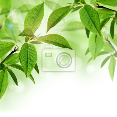 Été ou au printemps frontière fond avec des feuilles vertes
