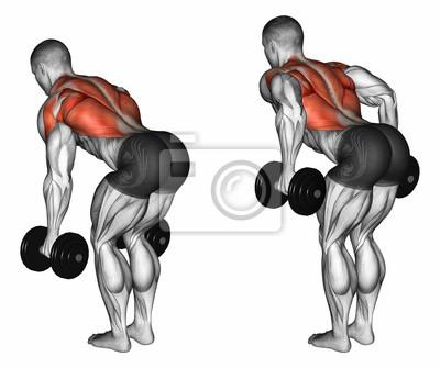 Posters Exercice pour la musculation. Les muscles cibles sont marqués en  rouge. Etapes initiale 6bbdeb15869