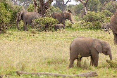 Posters Famille d'éléphants au Kenya