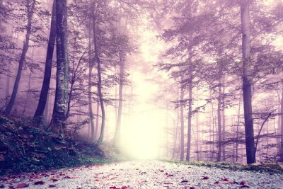 Posters Fantaisie couleur pourpre brumeuse route forestière. Paysage de rêve couleur de conte de fées.