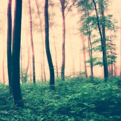 Posters Fantastique scène de la lumière de la forêt