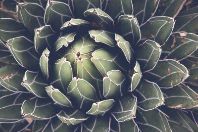 Posters Fin, haut, agave, succulent, plante, sélectif ...