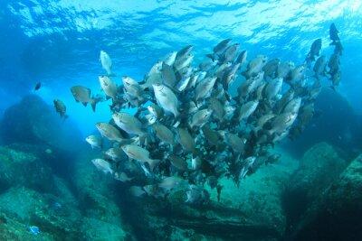Posters Fish, école, sous-marin, corail, récif, mer, océan