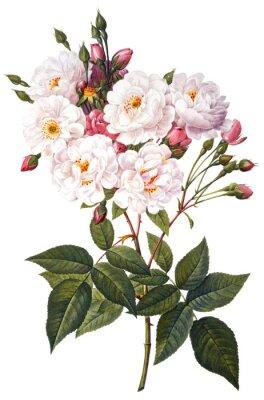 Posters fleur illustration