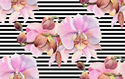 Posters Fleurs aquarelles. Orchidées roses