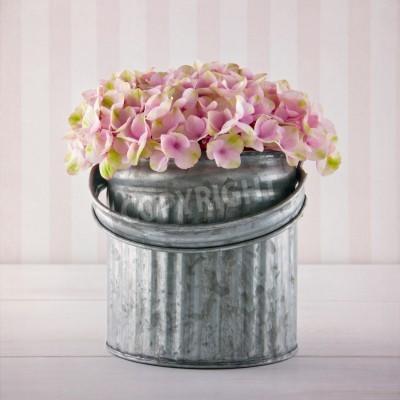 Posters Fleurs d'hortensia rose dans un seau en métal sur fond rayé millésime