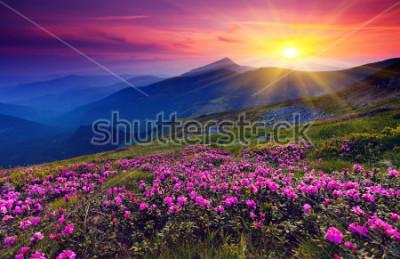Posters Fleurs de rhododendron rose magique sur la montagne de l'été