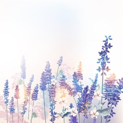 Posters Floral vector spring illustration with field flowers lavender, morning light