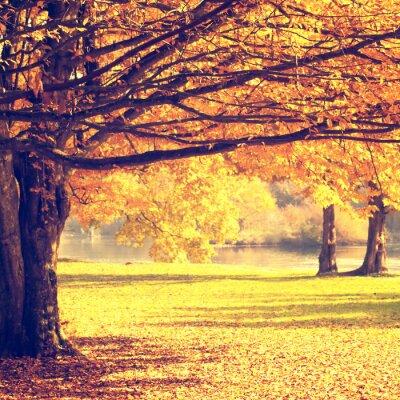 Posters Floue scène d'automne