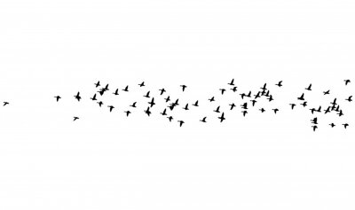 Posters Flying birds. Vector images. White backgorund.