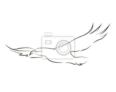 Flying Black Line Aigle Sur Fond Blanc Dessin A La Main Graphique