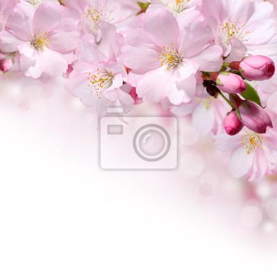 Fond de printemps des fleurs conception de frontière