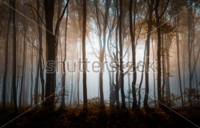 Posters Forêt brumeuse d'automne. Montagnes des Balkans, Bulgarie.