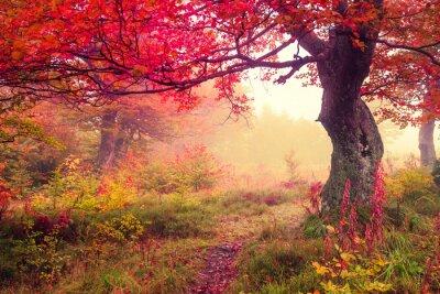 Posters forêt d'automne