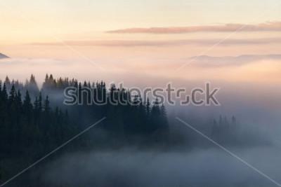 Posters Forêt dans les montagnes couvertes de brouillard