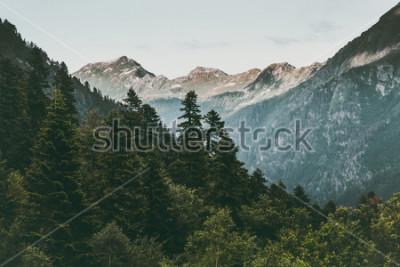 Posters Forêt de conifères et paysage de montagne Voyage paysages sereins été vert