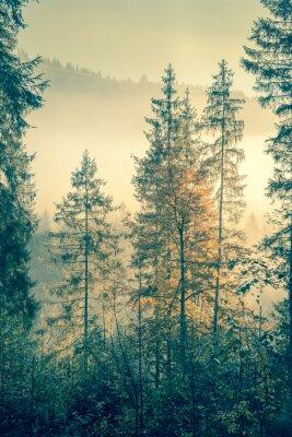 Posters Forêt sauvage en automne le temps de la saison, style vintage tonique