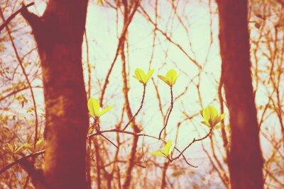 Posters Forêt Vintage