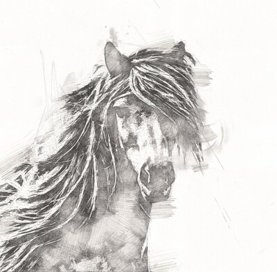 Posters freehand horse head pencil drawing
