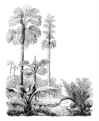 Posters Gebang and Nipa Palm Trees vintage illustration.