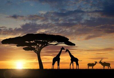 Posters Girafes avec Kudu au coucher du soleil