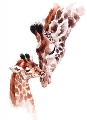 Posters Girafes mère et bébé aquarelle peinte à la main illustration d'animal sauvage isolée sur fond blanc