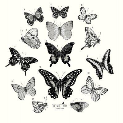Posters Grande collection de papillons, tiré par la main ensemble isolated.Vector illustration