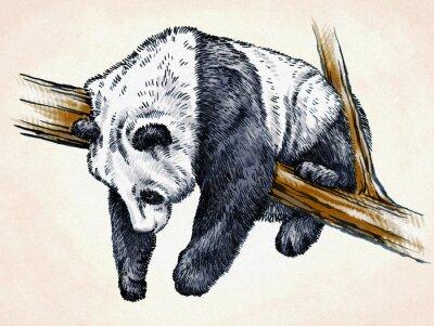 Posters Gravure encreur dessin panda illustration