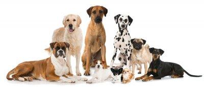 Posters Gruppe verschiedener Hunde - groupe de chiens
