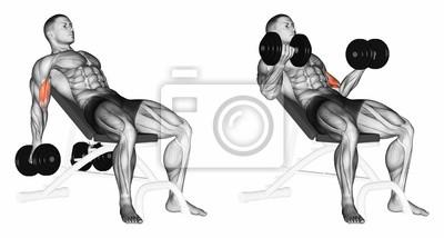 Posters Haltères de levage pour les muscles biceps sur un banc incliné. Exercice  pour la c81f2895d64