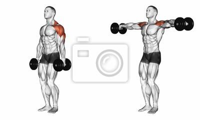 Posters Haltérophilie à la main. Exercice pour la musculation. Les muscles  cibles sont marqués b77b68810cc